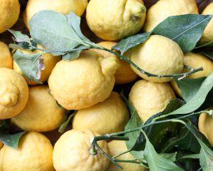 Primo Fiore citroen