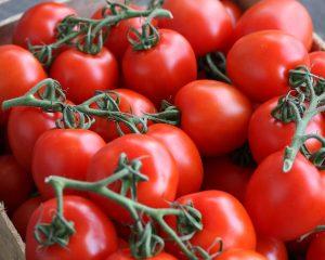 Roma tomaat
