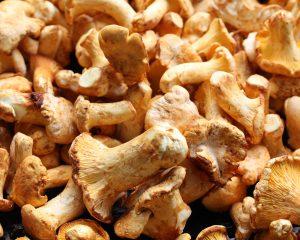 Girolles cantharelle paddenstoel