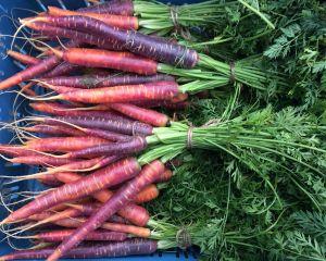Mini paarse wortel Open tuin