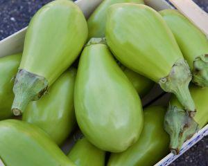 aubergine kermit bio