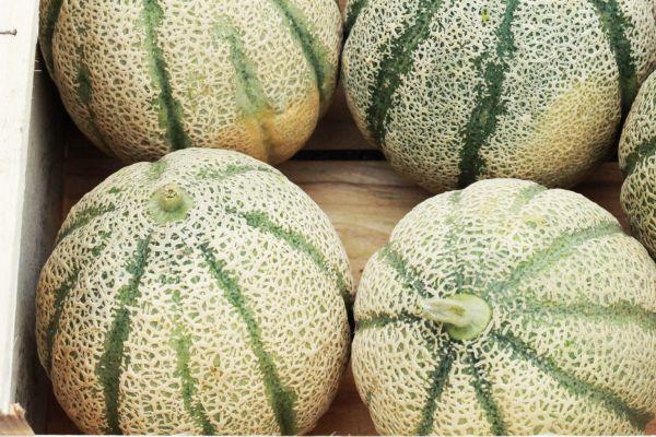 retato meloen