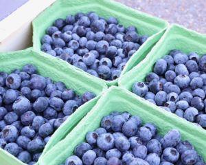 blauwe bessen bosbes bio