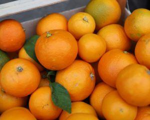 bittere sinaasappel