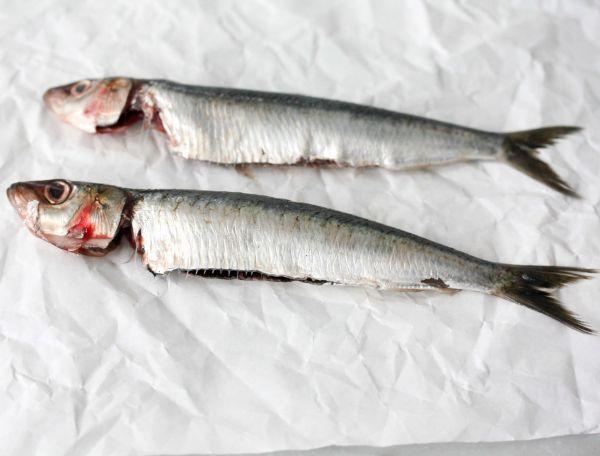 Sardines bretons