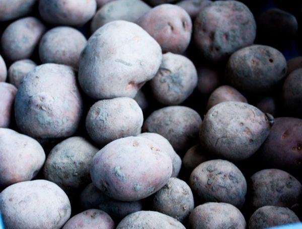 Bildtstar aardappel