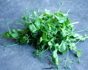 Cress snow pea
