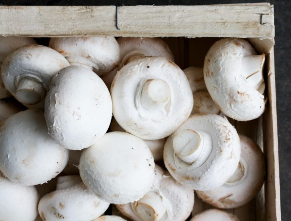 Reuze champignons