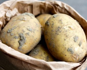 Frieslander aardappel