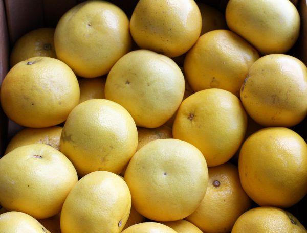 Witte grapefruit