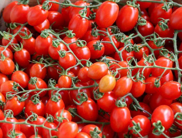 Datterino tomaat