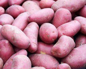 Roseval aardappel