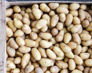 Kriel aardappel