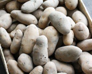 Belle de fontenay aardappel