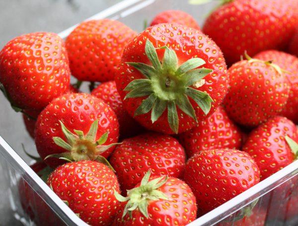 Elsanta aardbeien