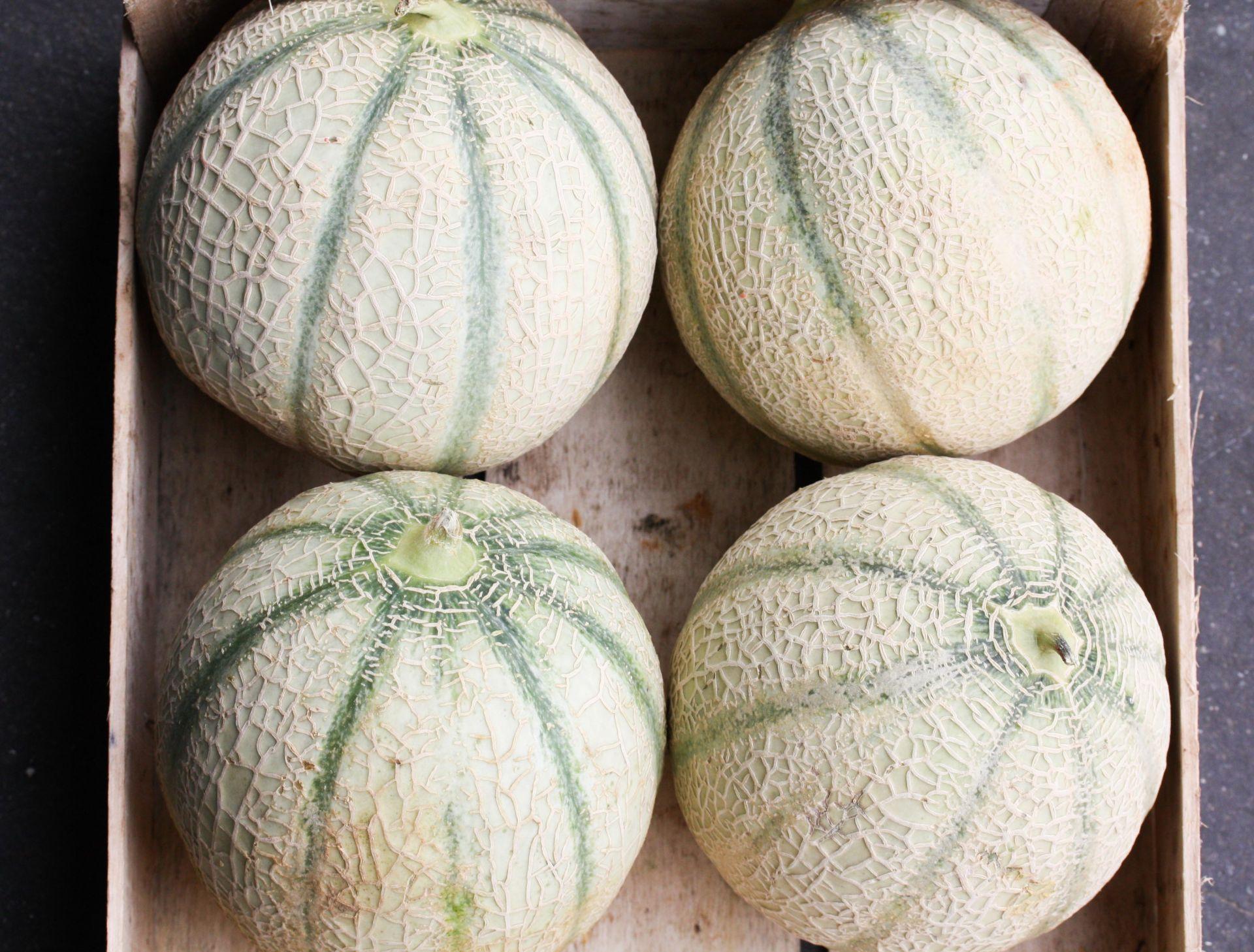 Cantaloupe meloen
