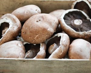 Portabella paddenstoel